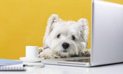 Socialização dos pets com outros animais também ajuda na relação com os donos