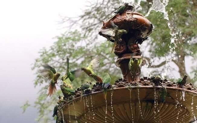 Jardim Botânico do Rio de Janeiro: recanto de tranquilidade