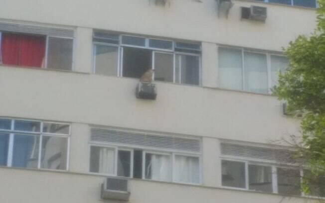 Cachorro sentado na caixa de ar-condicionado do prédio