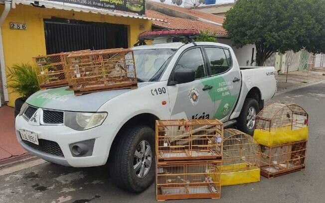 Homem  multado em R$ 12 mil por manter aves silvestres em cativeiro