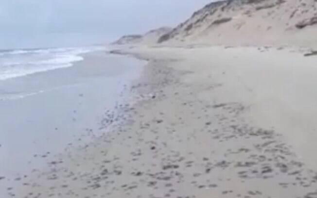 praia com óleo