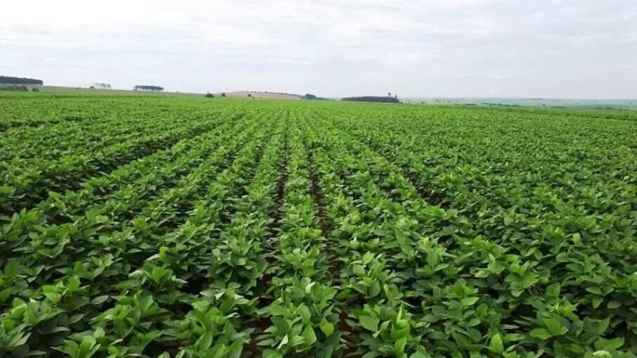 Valor Bruto da Produção Agropecuária (VBP) para 2021 está 12,1% acima do obtido em 2020.
