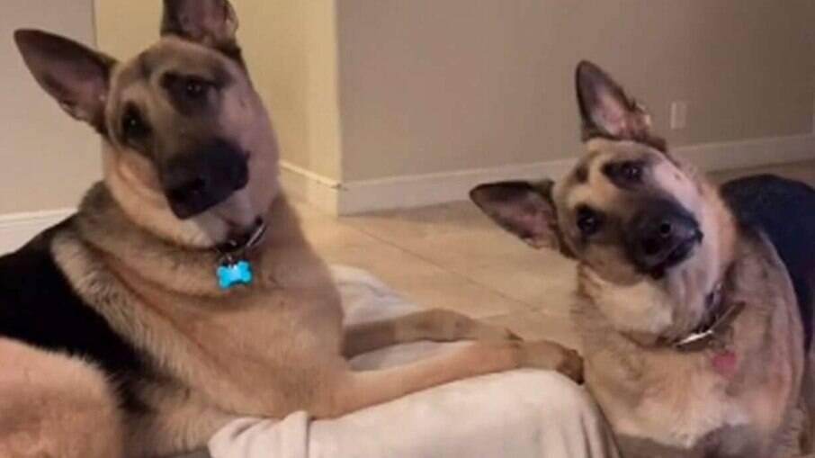 Hazel e Motley atentos a conversa da tutora ao telefone