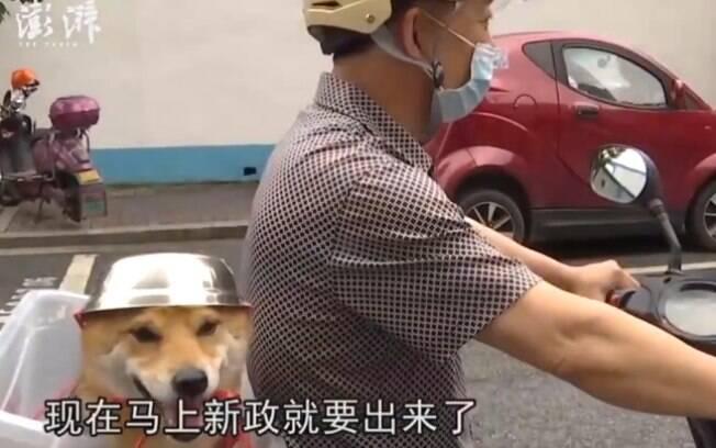 Cão passeia com capacete em moto e protagoniza cena mais fofa que você vai ver