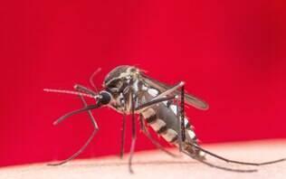 Mais de 500 cidades podem ter grande incidência de Aedes aegypti em 2019