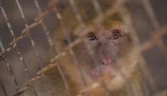 """""""Pior zoológico do mundo"""" exibe animais empalhados; veja o vídeo"""