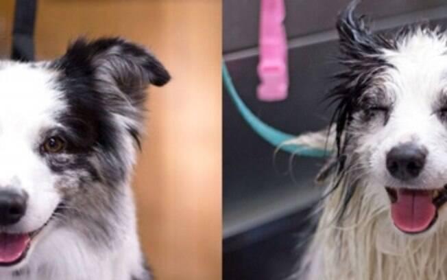 Um cachorrinho bem feliz antes e depois do banho.