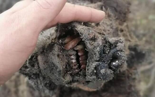 Urso-das-cavernas, extinto há cerca de 15 mil anos, é encontrado bem preservado na Sibéria