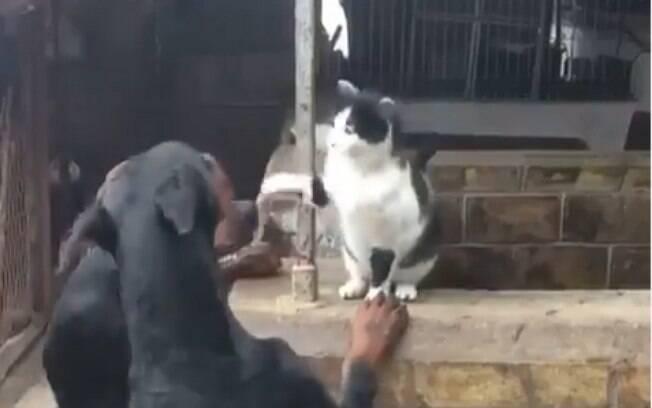 Gato se impôe contra três dobermans e ganha respeito