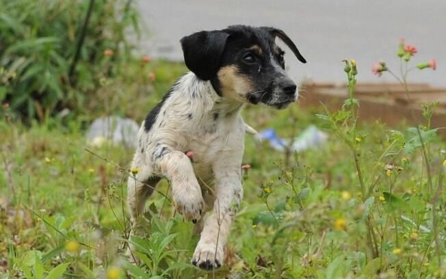 O cachorrinho, ainda sem nome, passa bem depois do acidente