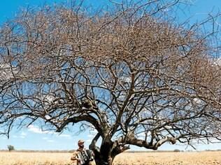 """Nacional. O pernambucano """"A História da Eternidade"""", de Camilo Cavalcante, foi o grande vencedor no Paulínia Film Festival"""