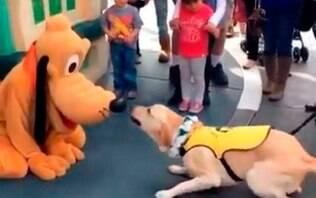 Cão-guia conhece Pluto na Disney e vídeo faz sucesso na internet - Mundo - iG