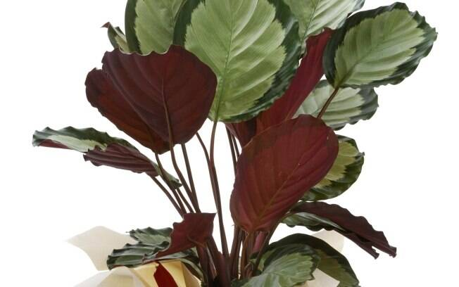 Alegre sua mesa de trabalho com plantas jardinagem ig - Planta de interior resistente ...