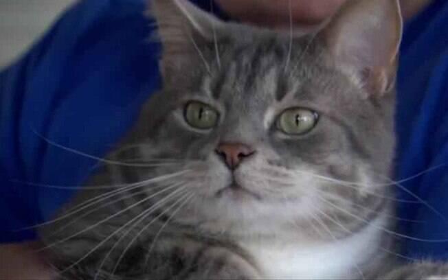 O gato, chamado Binky, não pensou duas vezes antes de defender a sua casa e atacou o homem que tentava invadi-la