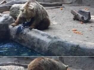 Urso surpreende ao salvar ave em zoológico.