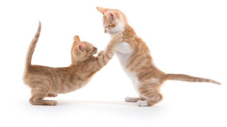 Como acostumar seu felino com outro filhote de gato  - Dicas - iG 016becd938