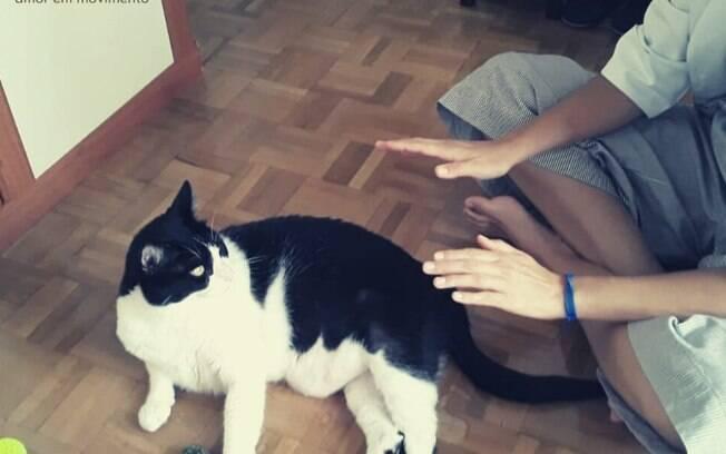 Sabina aplicando reiki em gato