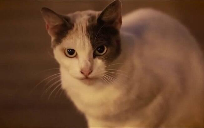 Os SRDs representam uma infinidade de opções de gatos para apartamento