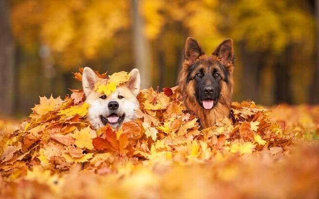 Confira os cuidados com animais no outono