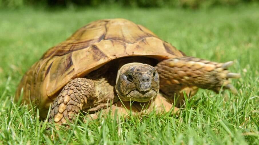 Maxi, a tartaruga fujona