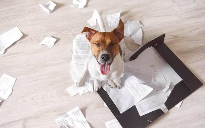 As bagunças feitas pelo cachorro podem ser resultado do ato do dono se despedir dele