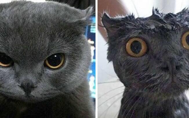 um gato cinza bravinho antes do banho e depois com os olhos bem arregalados durante o banho.
