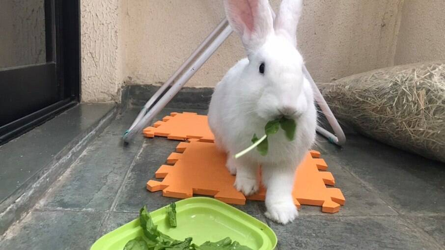 A alimentação do Nick é regrada, com feno próprio para coelhos, rúcula e ração