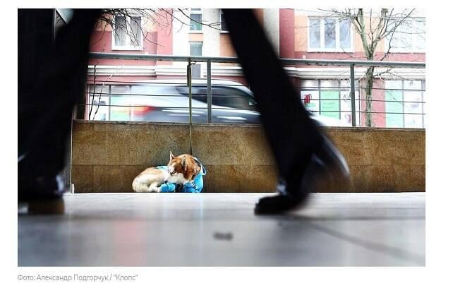 A história do 'Hachiko russo' foi contada pelo site russo Klops; na foto, o cachorro espera pela dona perto do trabalho dela