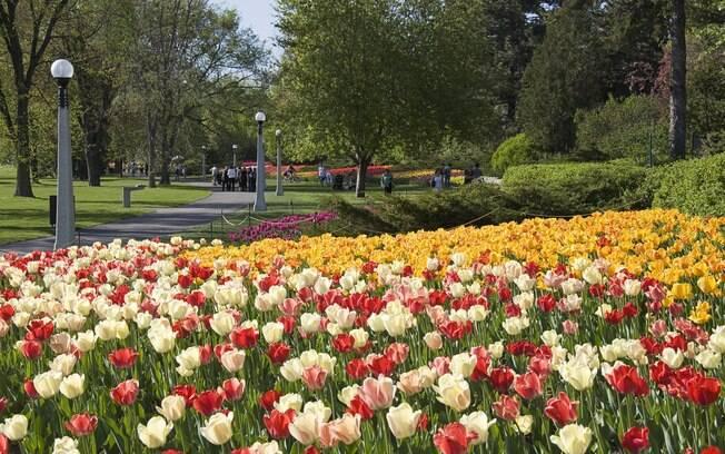 Commissioners Park, em Ottawa, é o maior parque de tulipas do mundo