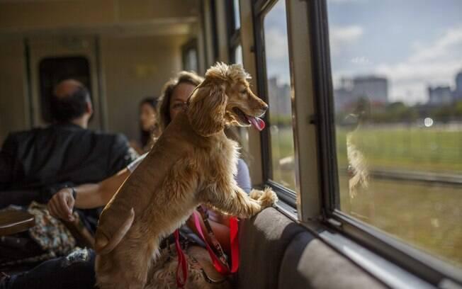 cachorro dentro do vagão