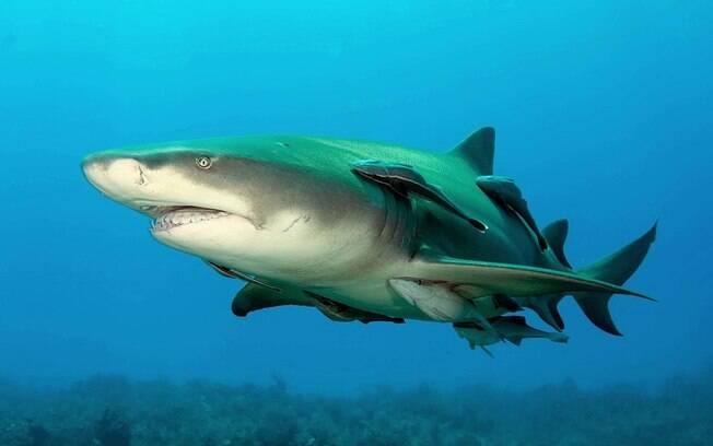 Apesar do susto, o tubarão não mordeu o surfista.