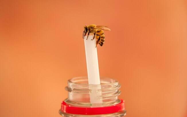 Alergia por picada de abelha é menos comum, mas quando ocorre uma picada é extremamente perigoso para o paciente