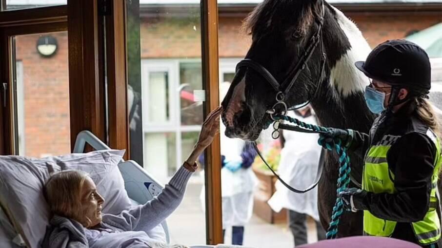 Jan Holman, 68, acaricia Bob, seu cavalo, em seu leito de morte