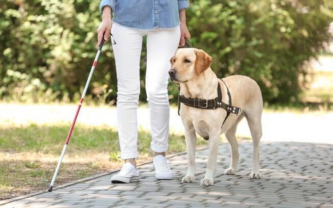 Lei federal garante o direito de usuários de cães-guia a embarcá-los em qualquer tipo de transporte