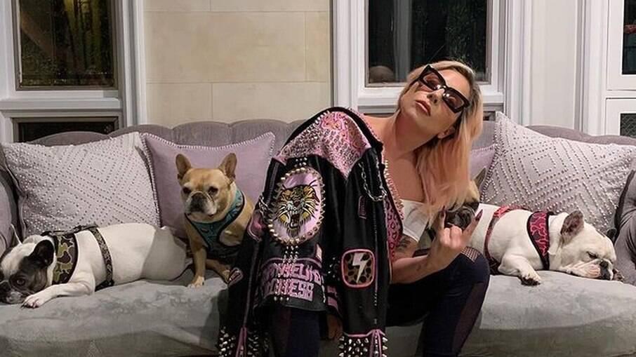 Cachorros de Lady Gaga são roubados em Los Angeles
