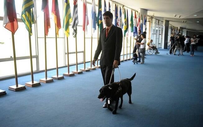 Mais que guia: projeto permite cães de assistência em locais públicos e privados