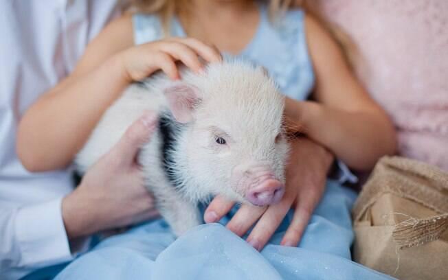 Os mini pigs são fofos, brincalhões e inteligentes.