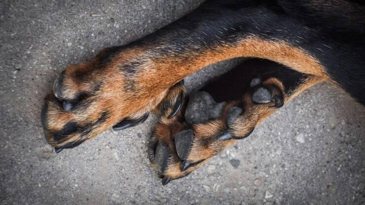 Aprenda a cuidar corretamente das patas do cachorro - Dicas - iG e82797380dd8