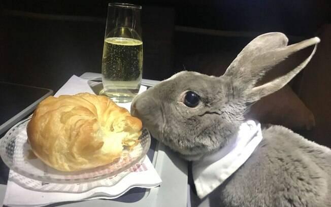 Coco, a coelha cinzenta