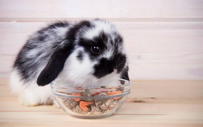 A dieta do coelho deve ser bem variada