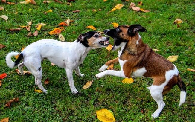 A melhor forma de apartar uma briga é tentar chamar atenção com barulhos agudos ou com comida