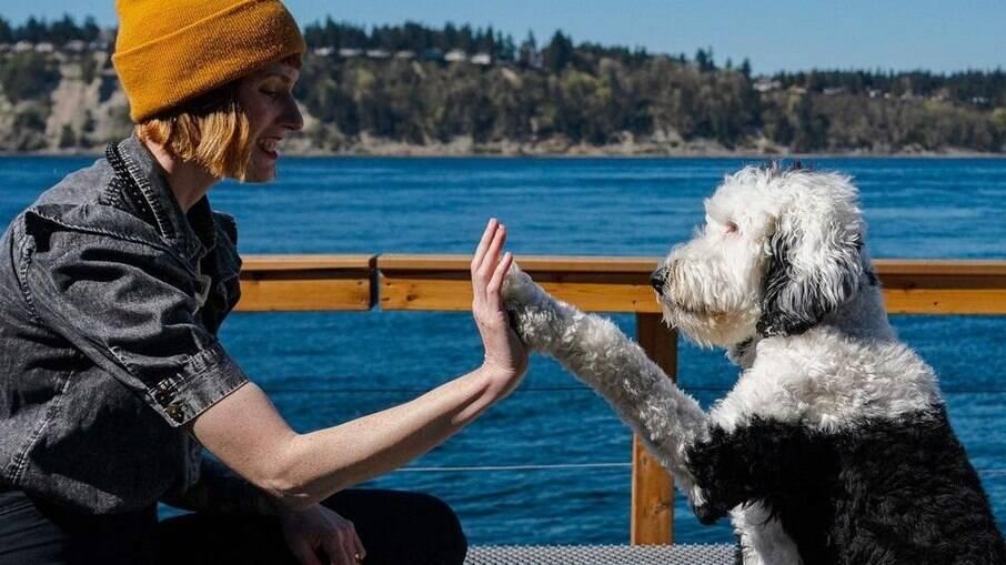 Cachorra pode se comunicar com até 92 palavras diferentes, usando botões