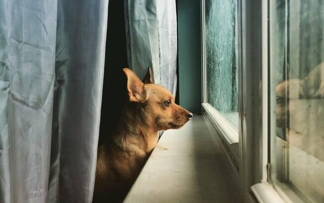 Moonie, dona do diário de cachorro, esperando o dono na janela