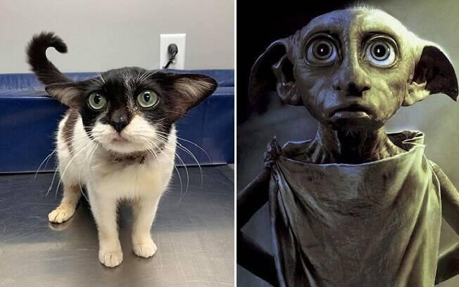 Foto da gata em comparação com o personagem  Dobby