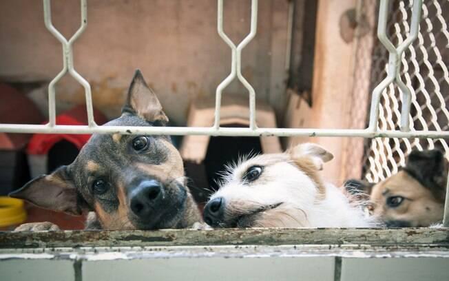 Cães abandonados na sede do projeto CEL, São Paulo/SP, Brasil