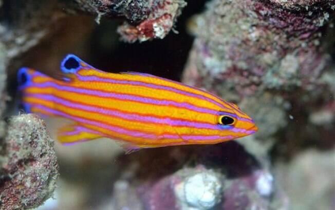 As espécies de peixes mais caras do mundo não são disponíveis para qualquer pessoa