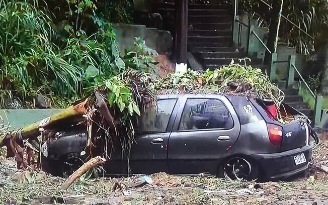 Em Santos, carro foi destruído após queda de árvore na entrada da cidade