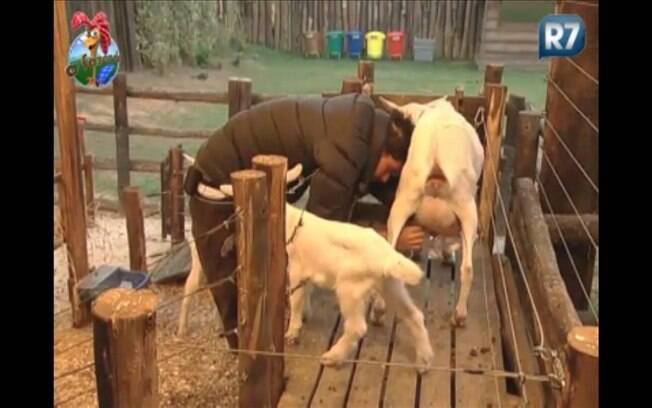 Thiago grita e agride os filhotes da cabra mais uma vez