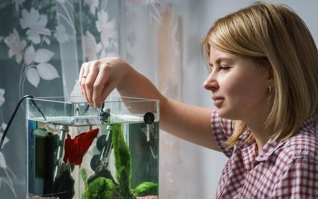 A maioria dos donos não entendem porque os peixes de aquário raramente sobrevivem