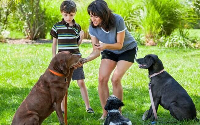 Adestrar cachorro com mais idade é possível, só requer mais paciência